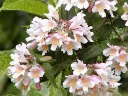 Flowers Plants by More Flowering Plants Diy