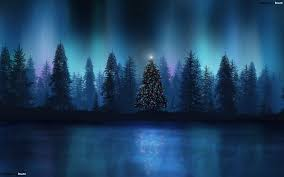 christmas tree in a wood hd wallpaper