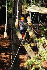 asheville zipline canopy tours asheville canopy and park