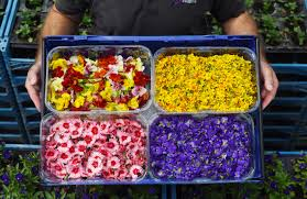 Edible Flowers Edible Flowers Are Now Available To Buy At Sainbury U0027s Metro News