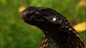 cute or terrifying animal phobias u2013 nat geo tv blogs
