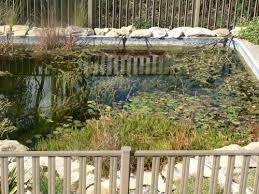 pool to pond