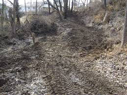 are boss black oil sunflower seeds plantable plants forum at