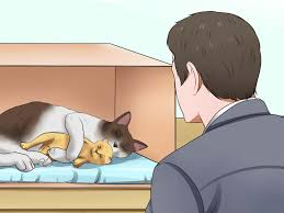 3 ways to prepare for kittens wikihow