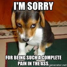 Pain In The Ass Meme - i m sorry for being such a complete pain in the ass sorry dog