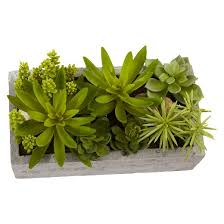 How To Make A Succulent Planter Nearly Natural Succulent Garden With Concrete Planter Target