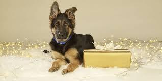 shop battersea dogs u0026 cats home