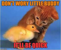 Quick Meme Maker - reassurance is always nice imgflip