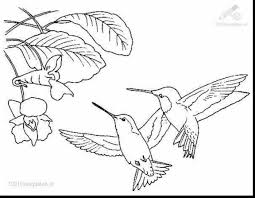 good printable hummingbird coloring pages with hummingbird