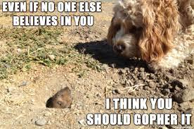Gopher Meme - inspirational gopher meme on imgur