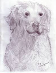 drawing sketches of animals pencil sketch animals phebron on