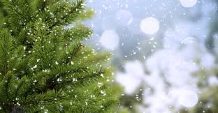 real versus fake which christmas tree is healthier greatist
