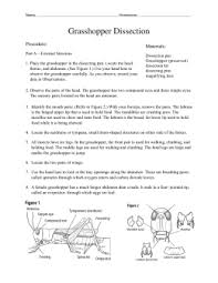 grasshopper dissection lab worksheet the best and most