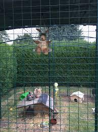 Come Costruire Una Casetta Per Conigli by Recinto Da Esterno Per Conigli Prodotti Per Conigli Omlet