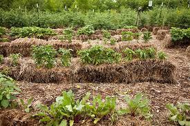 straw bale gardens ecoyards
