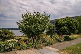 Solstice Park West Seattle madison park north beach parks seattle gov