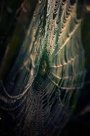 spider web transparent background 211 best magical spider webs u0026 spiders images on pinterest
