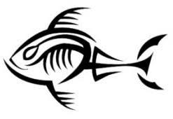 fish concept swittersb exploring
