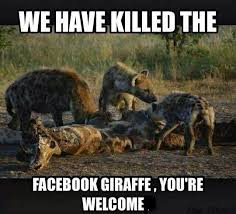Meme Giraffe - giraffe backlash the great giraffe challenge know your meme