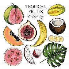 vector hand drawn exotic fruits engraved smoothie bowl ingredients