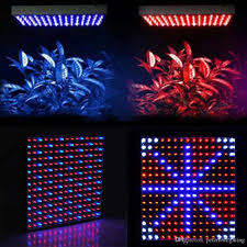 Kitchen Grow Lights Which Led Grow Lights Are Best For Growing Cannabis Easy