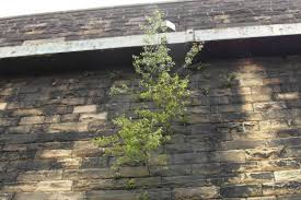 plants that grow on walls dengarden