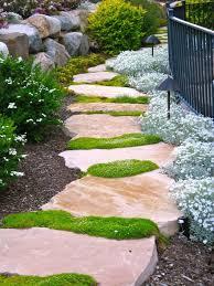 Backyard Ground Cover Options Backyard Paver Pathway With Irish Moss Ground Cover Plants