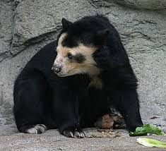 Are Bears Color Blind The Eight 8 Bear Species Of The World Bear With Us