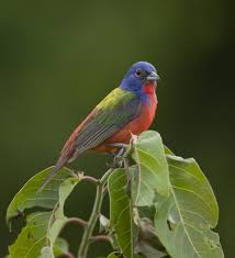 Arkansas birds images Arkansas birds arkansasbirds twitter jpg