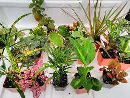 low light outdoor plants amazon com live indoor plants grocery u0026 gourmet food bonsai