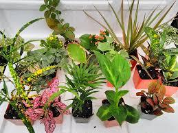 amazon com house plants grocery u0026 gourmet food