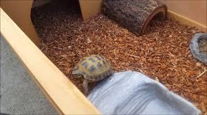 Tortoise Home Decor Awesome Tortoise Box Turtle Setup At Lllreptile Youtube