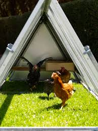 royal rooster blog