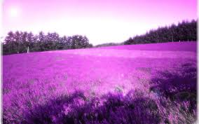 Easy Apply Wallpaper by An Endless Field Of Purple Flowers Life Of Flowers Pinterest