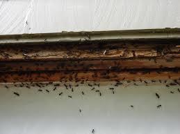 horizon pest control blog finding where the carpenter ants live