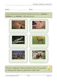 carnivore herbivore or omnivore animals home page