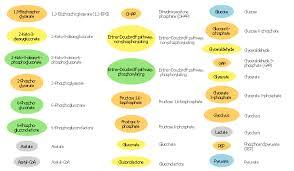 design elements carbohydrate metabolism biology design