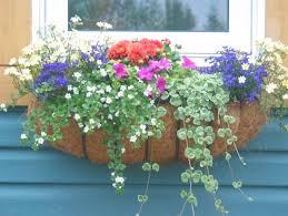 Summer Flower Garden Ideas - 132 best garden images on pinterest flower gardening flowers