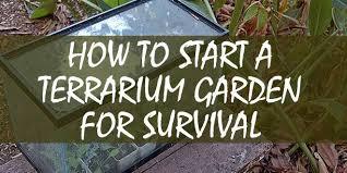 how to start a terrarium garden for survival survival sullivan
