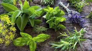 les herbes de cuisine les herbes en cuisine facile et bon my jardin my