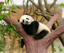 Memes De Pandas - byokids china