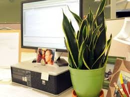 Best Plant For Indoor Low Light 25 Best Best Office Plants Ideas On Pinterest Best Plants For