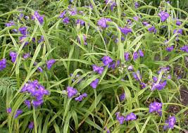 low light outdoor plants the 11 best plants to grow in your terrarium simplemost