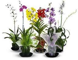 orchid plants live orchid plants
