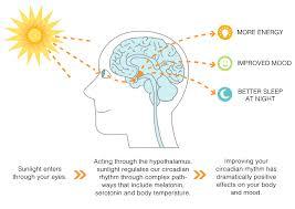 Seasonal Affective Disorder Light Therapy Seasonal Affective Disorder Awareness Disorders Pinterest
