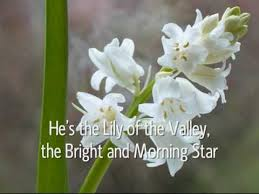Lily Of The Valley Flower The Lily Of The Valley Youtube