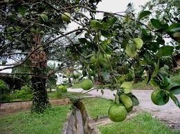Judge A Tree By Its Fruit - fruits of the land hutterites