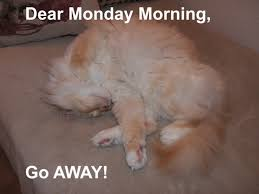 Monday Cat Meme - cat meme purrfect kitties
