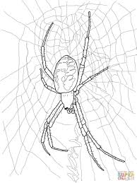 download coloring pages spider coloring page coloring page of a