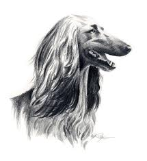 afghan hound fabric afghan hound drawing art print signed by artist dj rogers